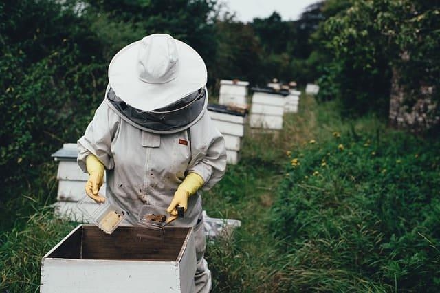 Бджоляр Аграрний сектор
