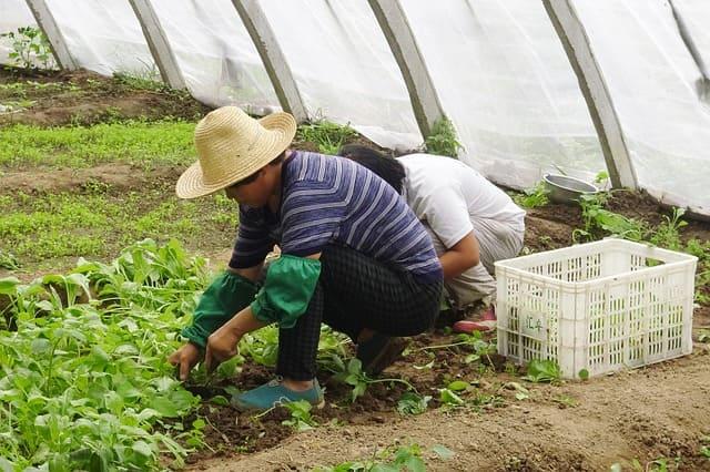 Овочівник Аграрний сектор
